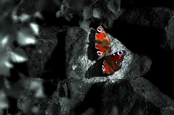 Fluttering Bye! by Firebaby
