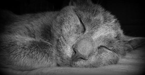 Shhhhh Kitty Sleeping by jayagoddess