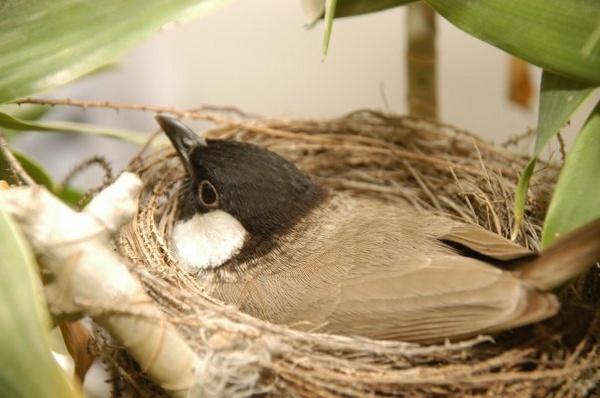 Bird in the nest by shahbaz