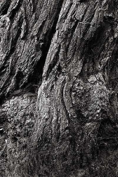 Tree Bark by Crabtree99
