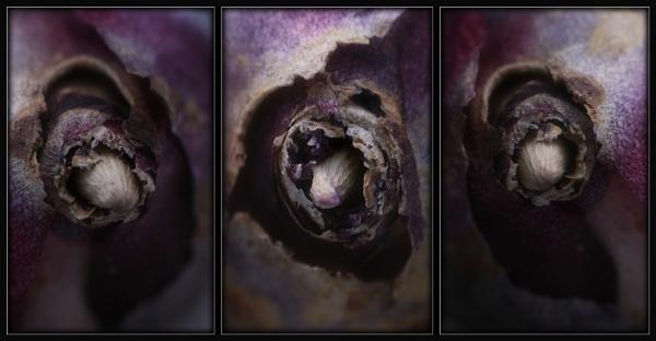 Hyacinth Triptych by Morpyre