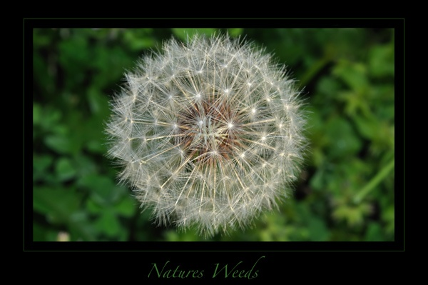 Nature\'s Weeds by Jodes