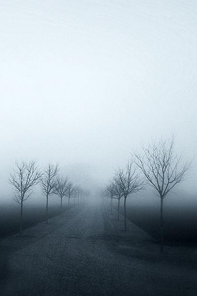 Misty Trees by stistrup