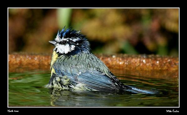 Bath time by oldgreyheron