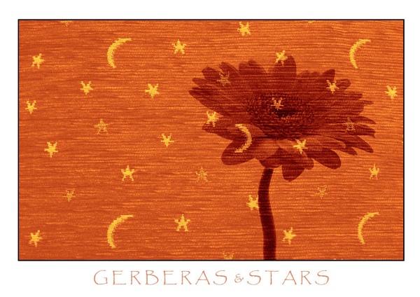 Gerberas & stars by allan_j