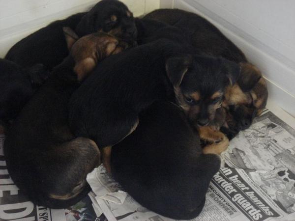Sleeping pups by TinyBrad