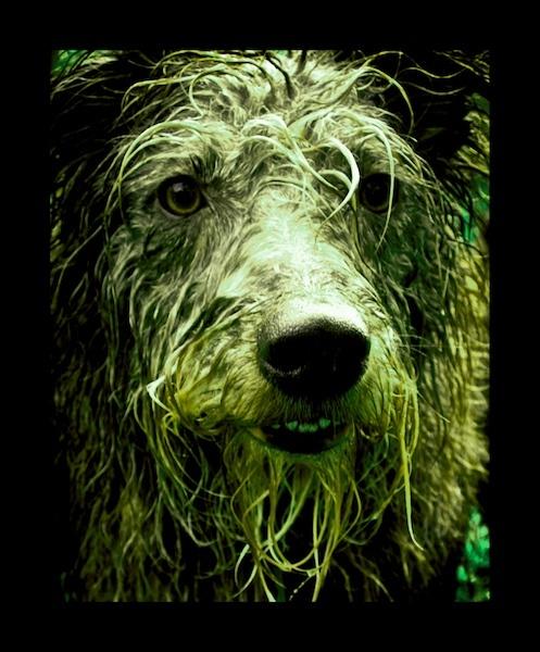 A Dog. by Charteris