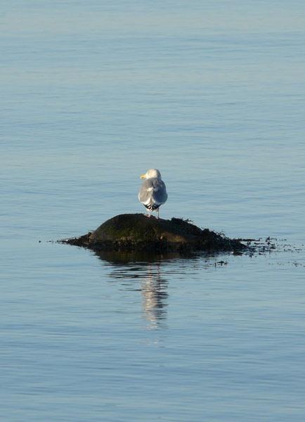 Resting reflection by benteb