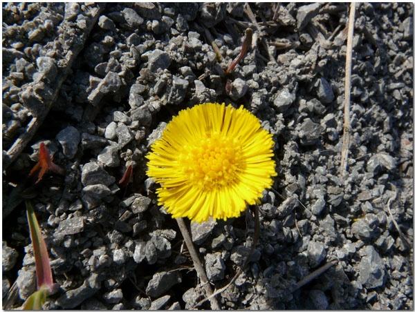 Spring power by benteb