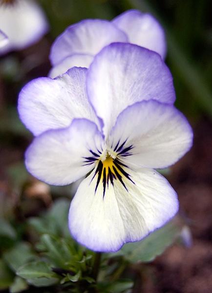 lovely flower by geosami