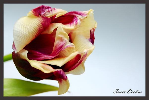 Sweet Decline by sharlotte51