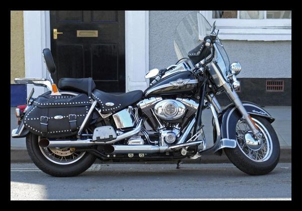 Harley by RobbieWales