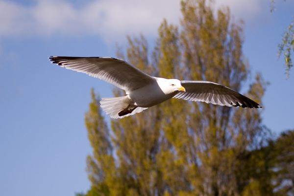 Gull by Nick_potts