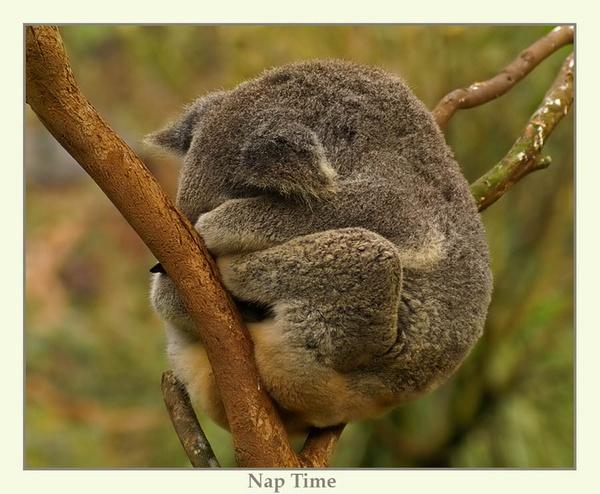 Nap Time by Joeblowfromoz