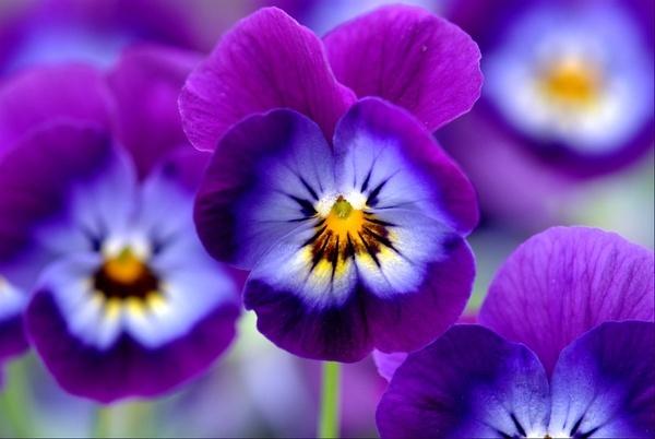 Les belles fleurs by DiBosco