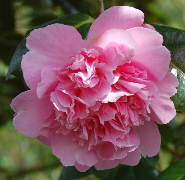 Pretty in pink by Rachel99