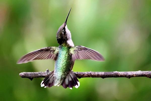 Taking Flight by poppy59