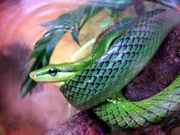 snake by darrennmel