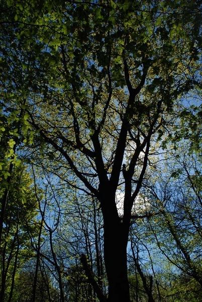 Tree silhouette by tinareid1