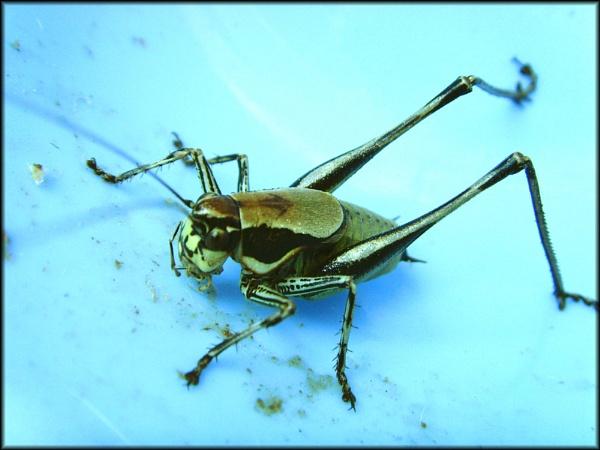 Locust by Jonny5874