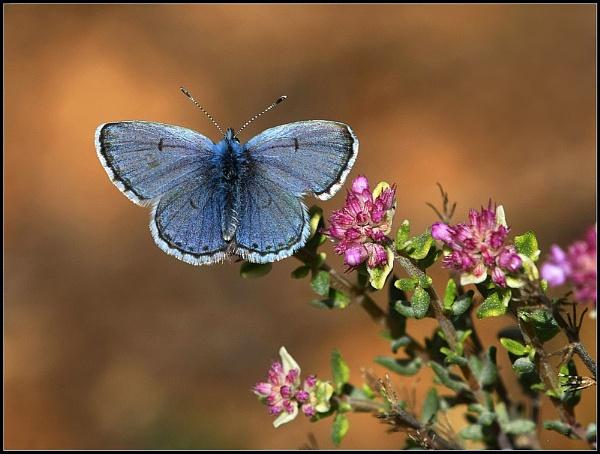 Blue Dream by celestun