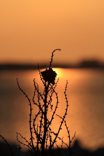 The Burning Bush by photodocktor