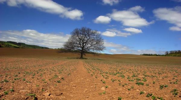 lone tree by davidcollins