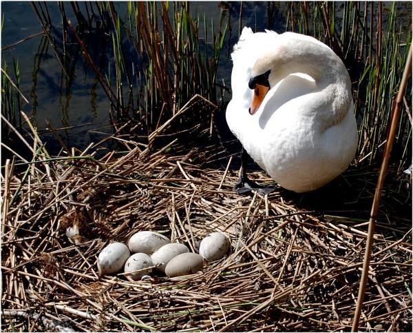 nest eggs by glassmaker