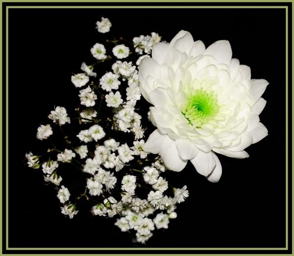 Whiteness by Artois