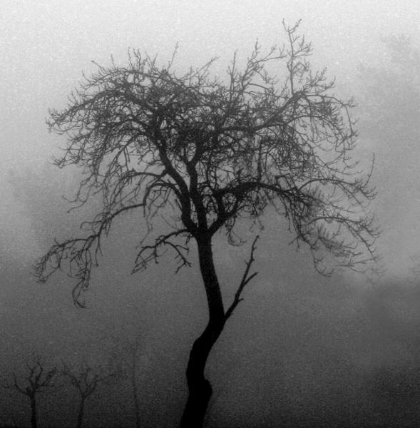 Through the mist by Artois