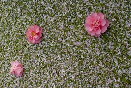 Sprinkles of Spring by akhtarkhan