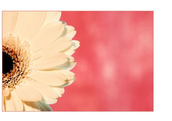 flower by gsxr400