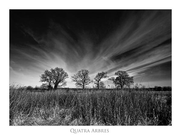 Quatra Arbres - Mono by Stewy