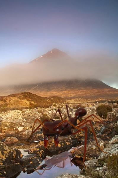 Buachaille Monster Ants! by dsafari