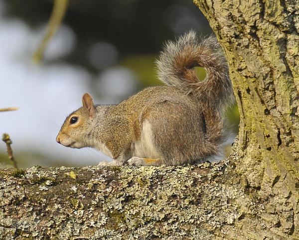 Garden Squirrel by Ricky37