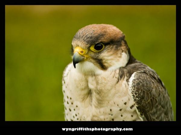 Hudson Hawk by Wyn