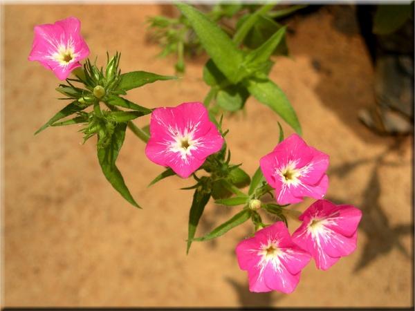 Tiny flower by moonboyindia