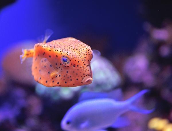 Box Fish by Rorymac