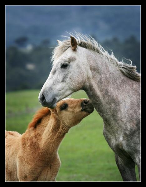 Love by Dimitre_P