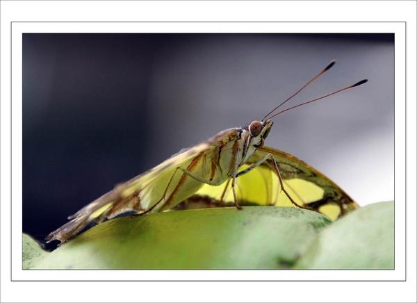 Green Glider... by Jamfu