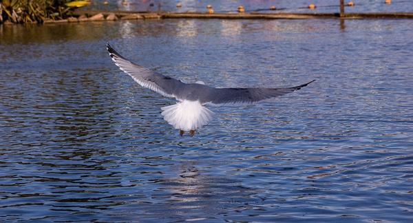 Landing by Nick_potts