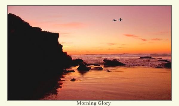 Morning Glory by Joeblowfromoz