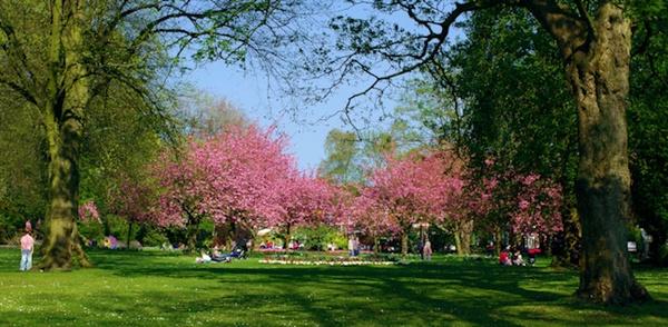 town gardens, swindon by petemasty