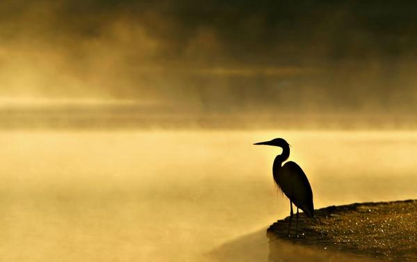 Golden Fog by poppy59