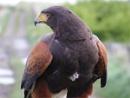 Observing Eagle