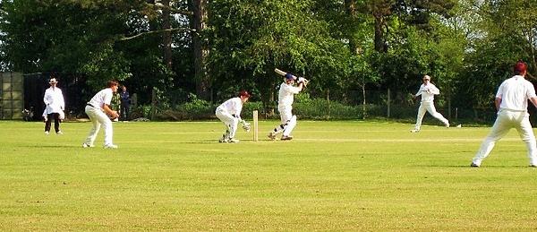 Local cricket by ladysue