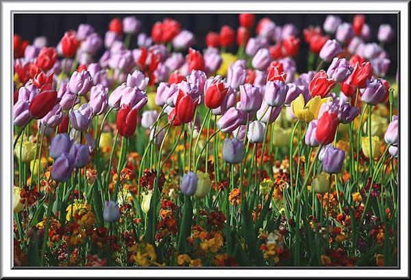 Flowery by mjstead
