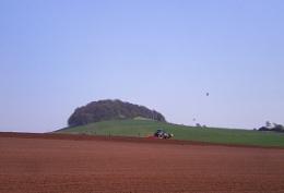 potato landscape
