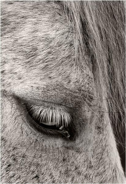 Pony by Steveman