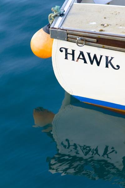 Hawk by LinsTheStar